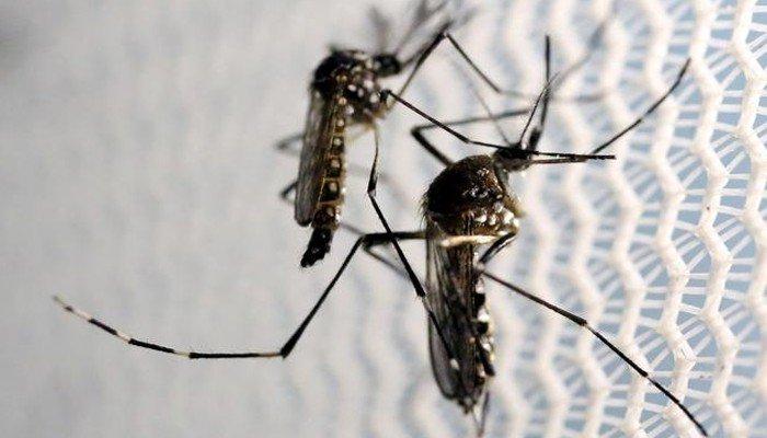 Karachi witnesses increase in dengue cases: health department