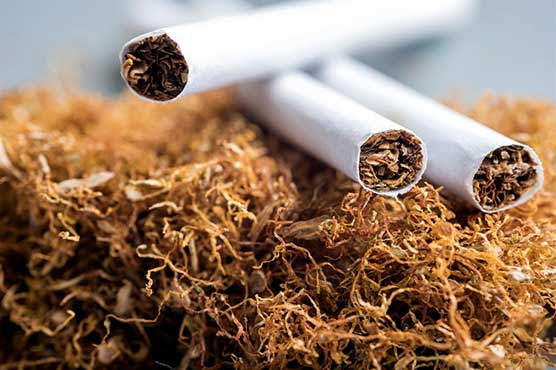 Tobacco exports fell by 14.10% in 8 months