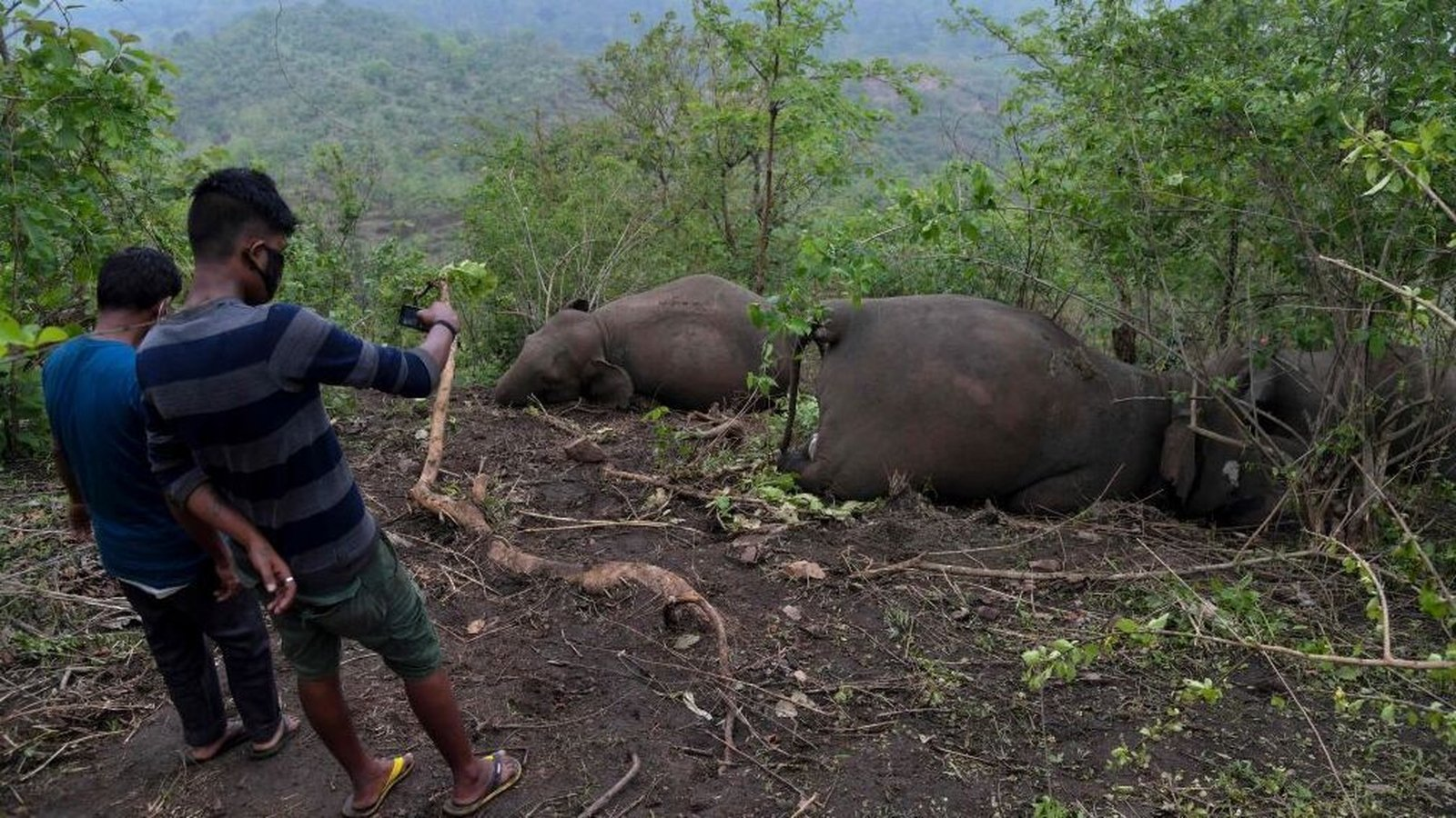 18 elephants suspected killed by India lightning strike