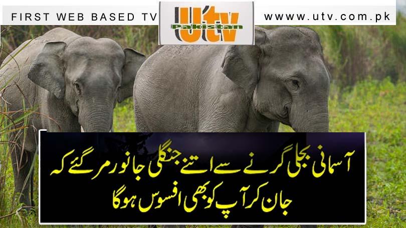 آسمانی بجلی گرنے سے اتنے جنگلی جانور مرگئے کہ جان کر آپ کو بھی افسوس ہو