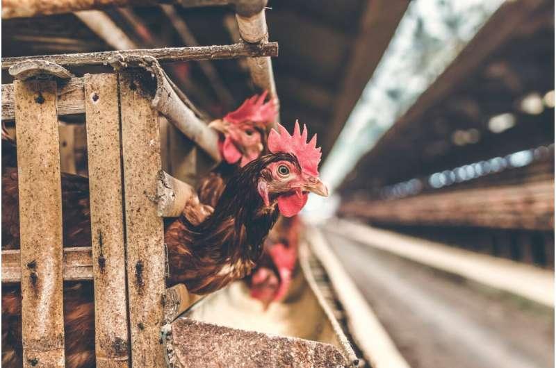 China confirms first human case of bird flu strain